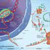 DNA Merkmal