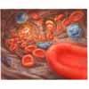 Arterie 2