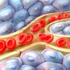Erythrozyten