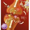 Synapse Glutamat Rezeptor