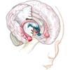 Gehirn Hippocampus Thalamus
