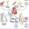 Stammzelltherapie 6